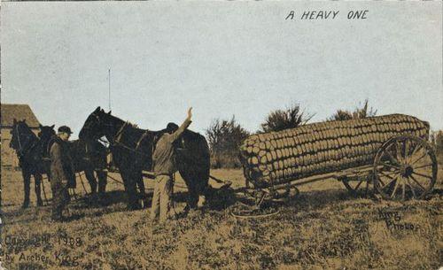 Tall tale postcard horse