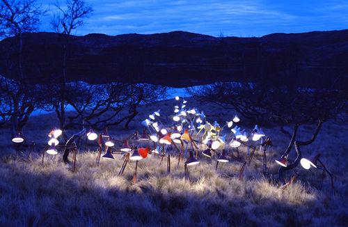 Licht in de wildernis