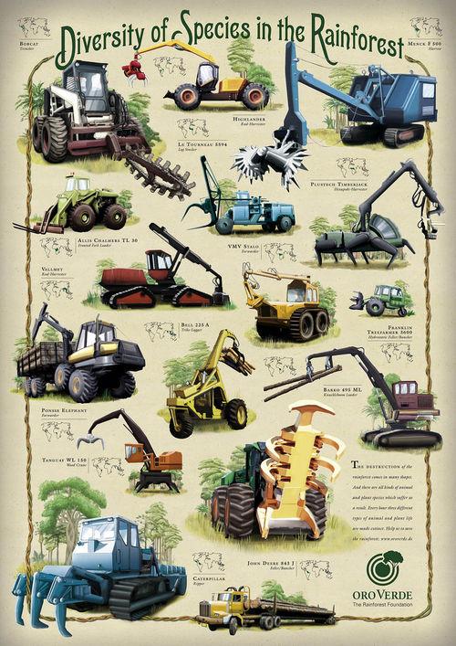 Biodiversiteit in het regenwoud