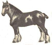 Paard_lowtechmagazine