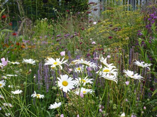 Prairietuin met bloemen2