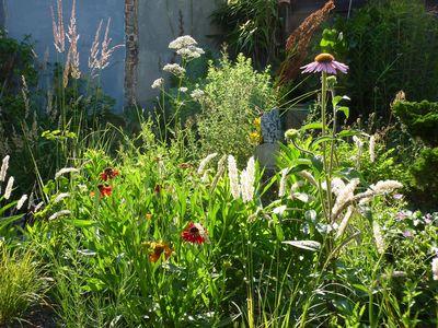 Prairietuin met bloemen