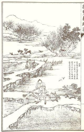 Fertilizing rice seedlings in china