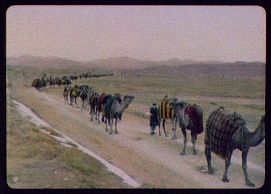 A camel train on the desert