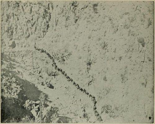 Mules ropeway