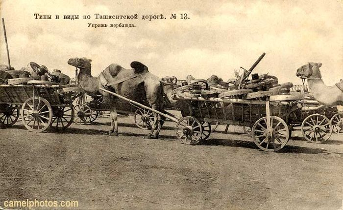 Camel wagon loaded