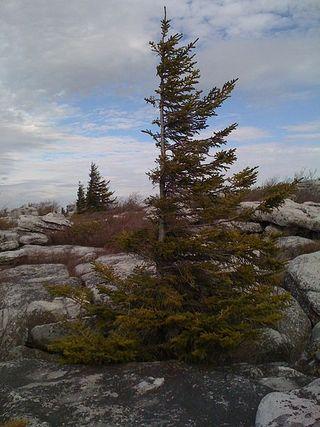 Flagged tree