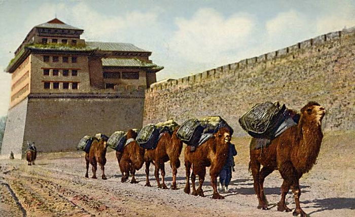 Camel train china wall