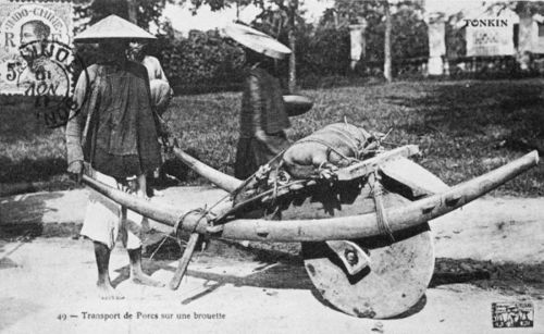 Vietnam Wheelbarrow carrying a Pig
