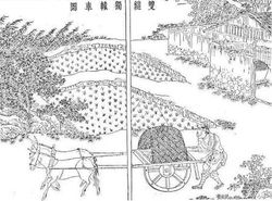 Chinese wheelbarrow animal traction