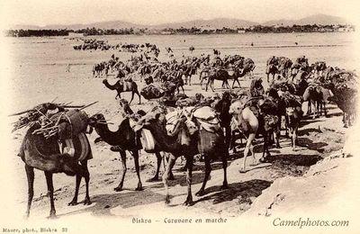 Pack_camels