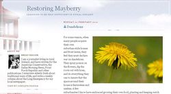 Restoring mayberry