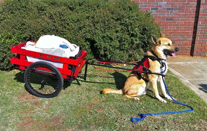 Dog cart 4