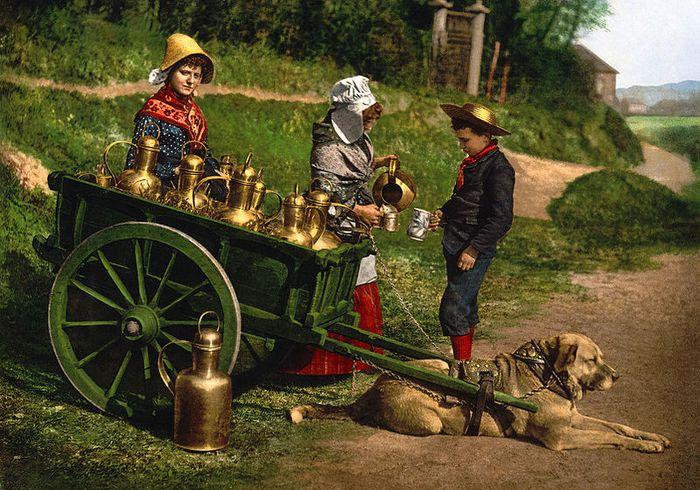 Dogcart in belgium