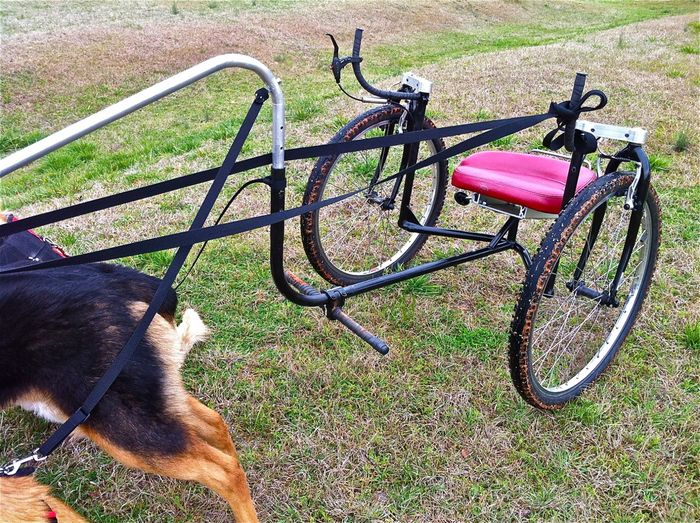 Dog cart 3