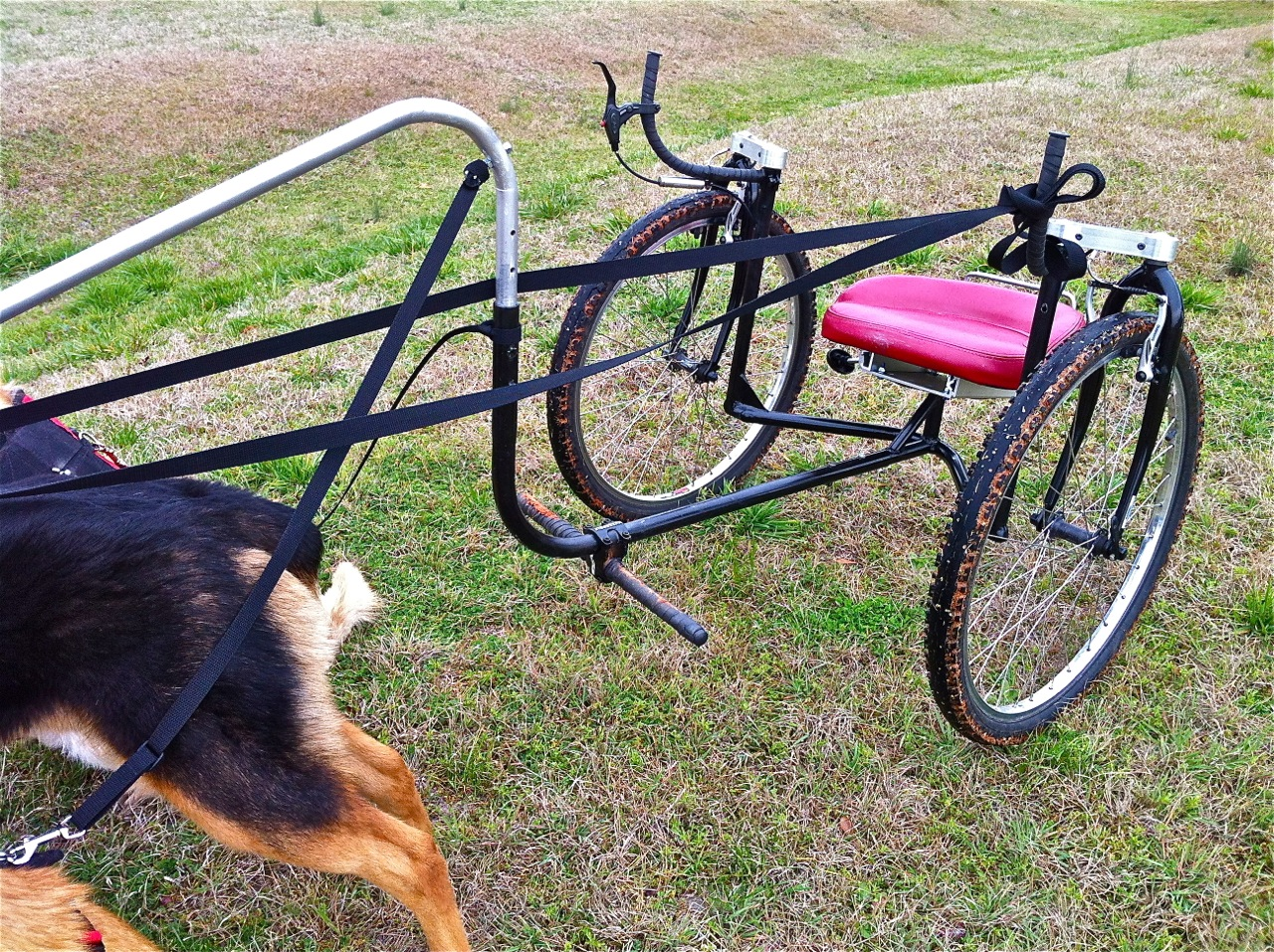 Dog Sulkies: Pet Powered Mobility