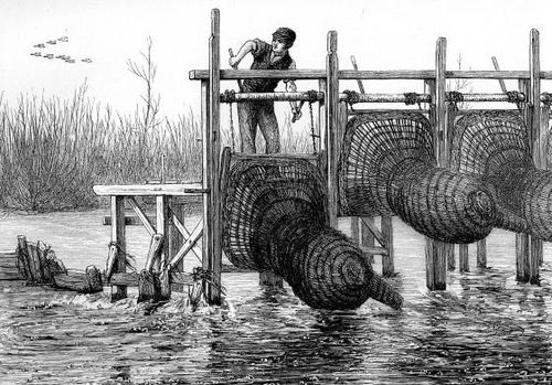 Fish traps in the thames