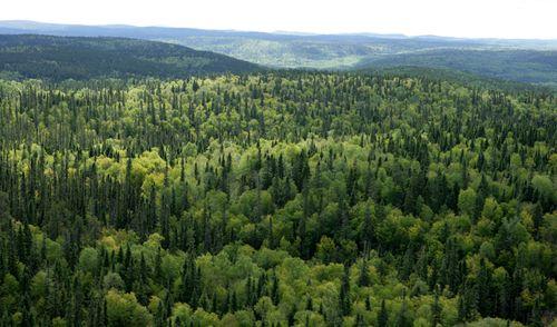 Canadees woud foto greenpeace