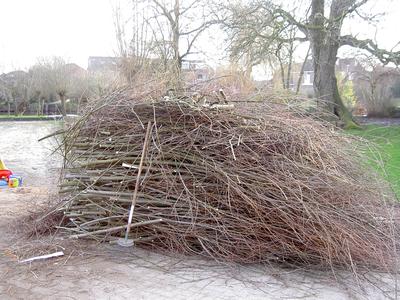Brandhout knotwilgen