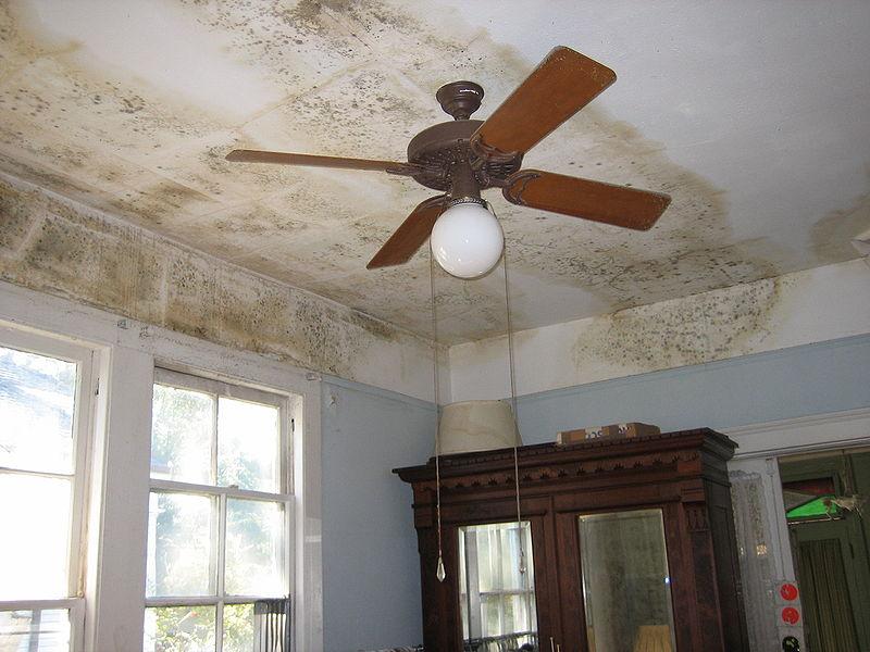 Schimmel op het plafond