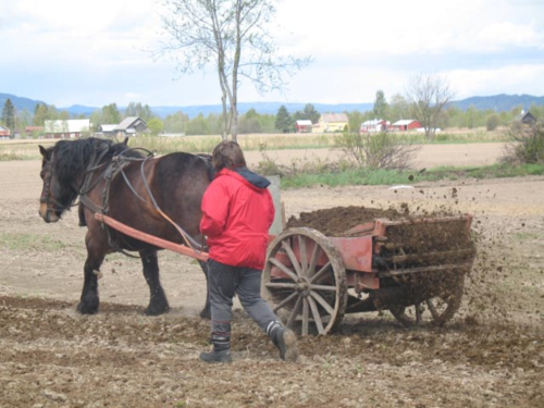 Mechanical  manure spreader