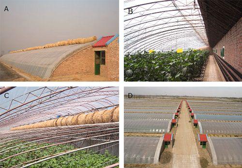 Chinese tuinbouwkas 1