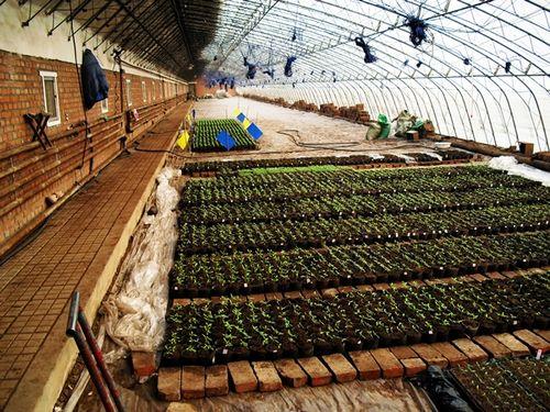 Chinese greenhouse interior