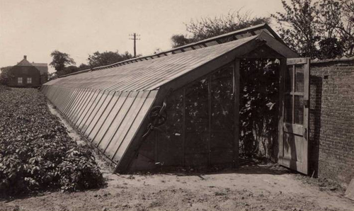 Dutch greenhouse 1930s