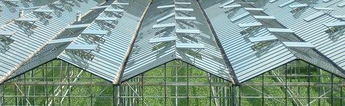 Glastuinbouw in nederland