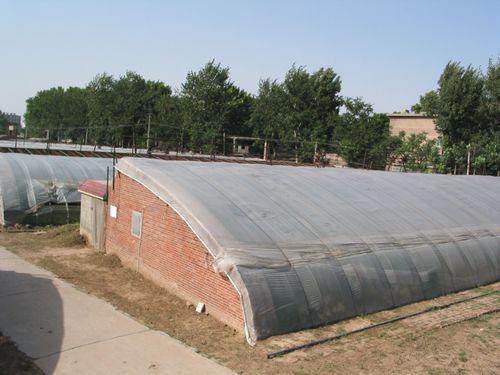 Solar greenhouse energy farms 1