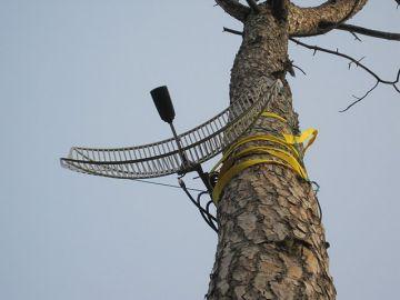 Antena-guifi-floresta