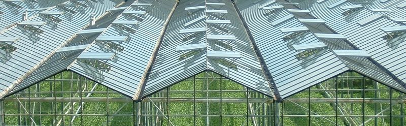 Dutch style all glass greenhouse
