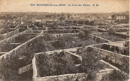 Fruitmuren perzikken in montreuil