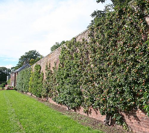 Fruit wall in the UK