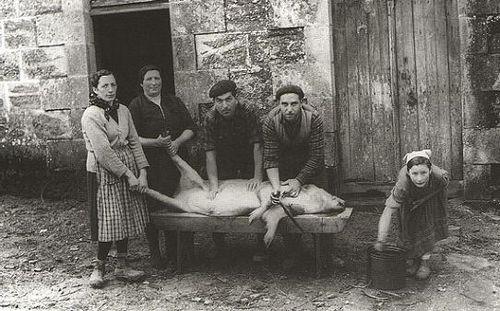 Traditionele varkenskweek