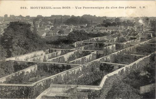 Fruitmuren montreuil