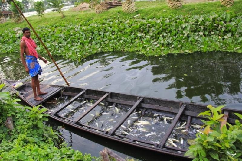 Calcutta-fish-min