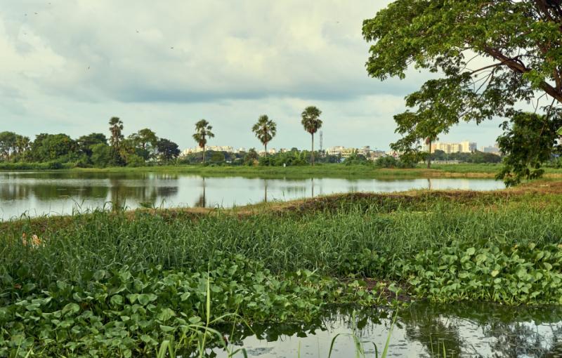 Calcutta-wetland