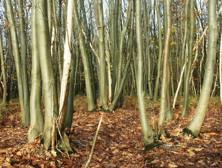 Coppice-rotation-min