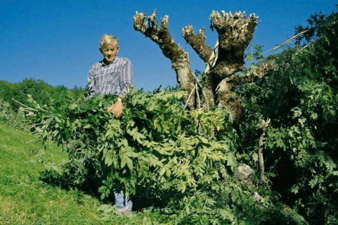 Leaf-fodder-min